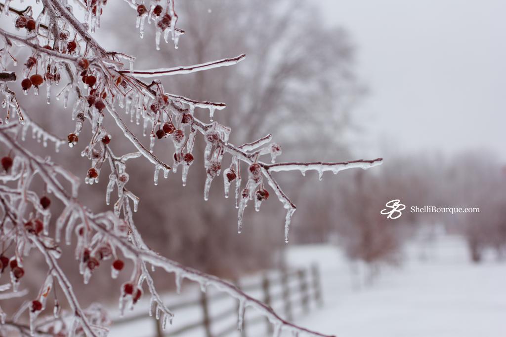 Frozen landscape - ShelliBourque